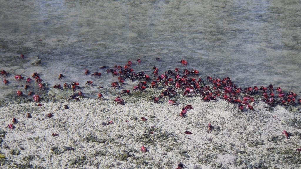 island-conservation-science-palmyra-atoll-line-islands-usa-photography- (7)