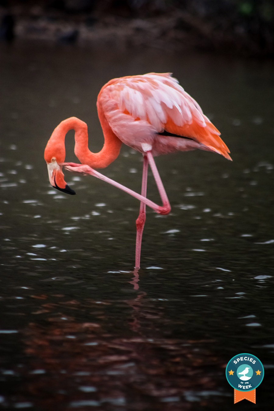 Island Conservation science cabritos isla island science dominican republic flamingo