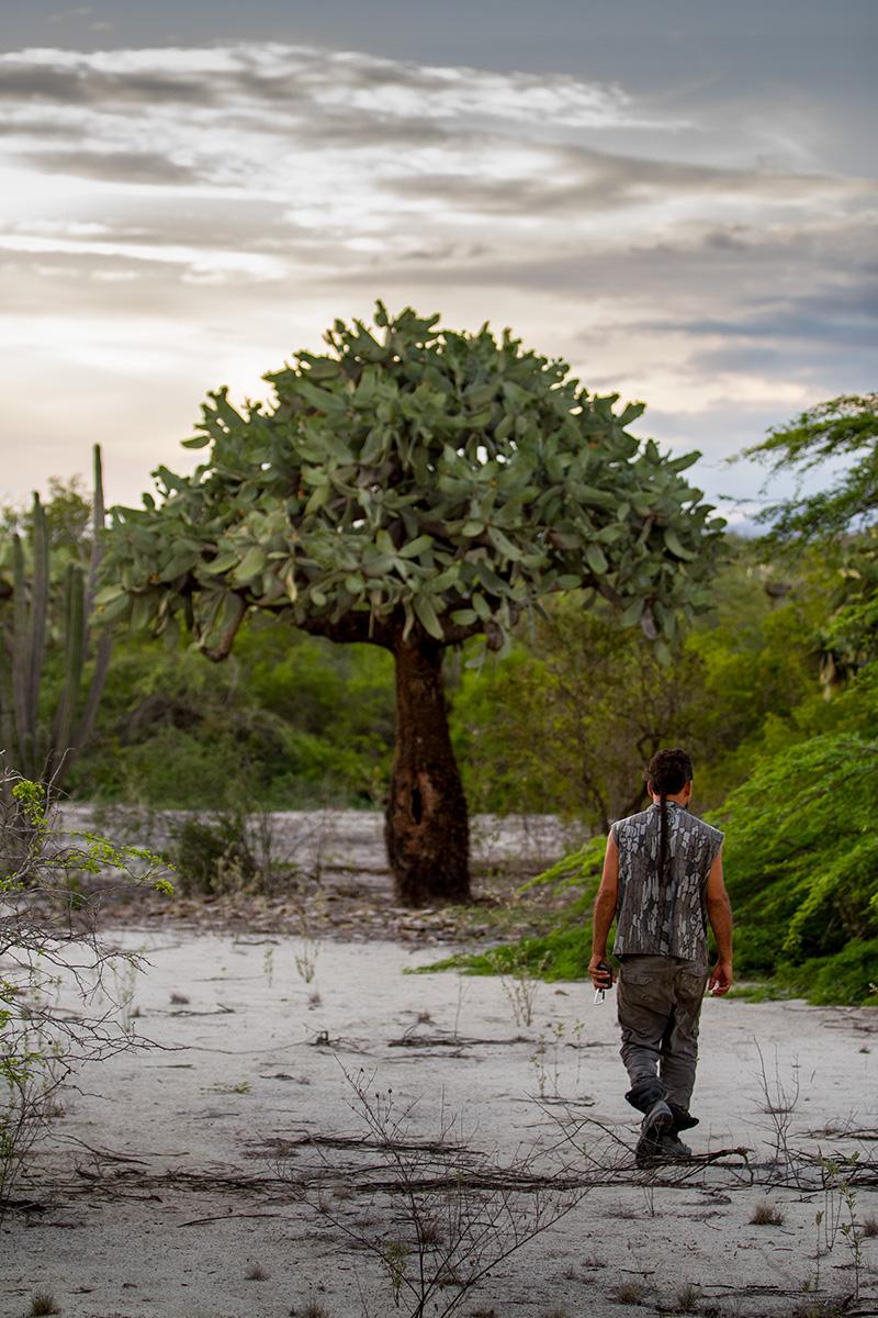 island-conservation-science-cabritos-island-update3-2