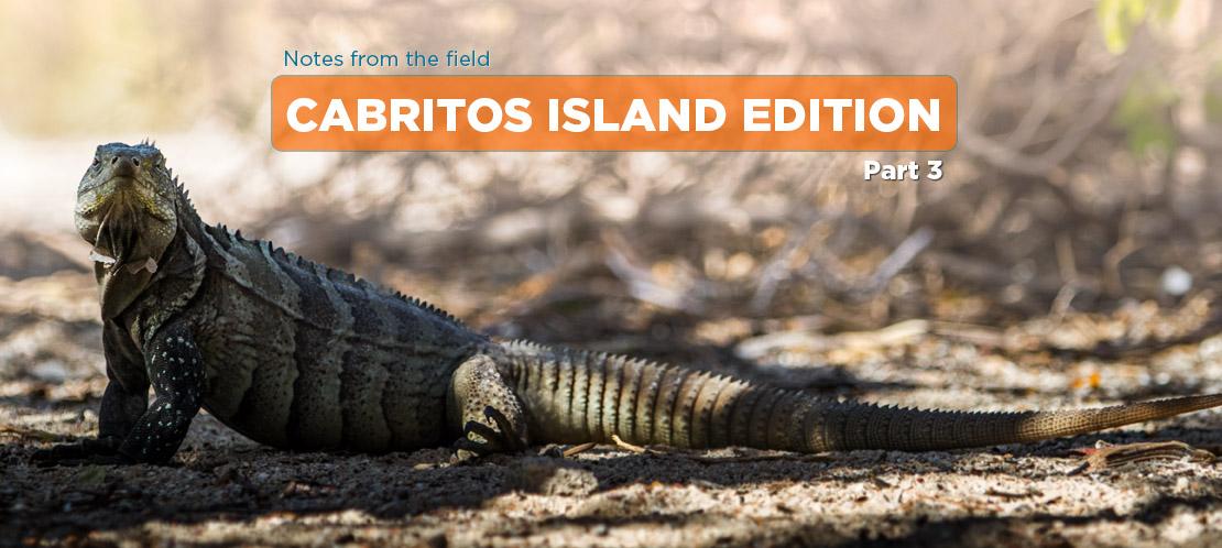 Island Conservation science cabritos island dominican republic