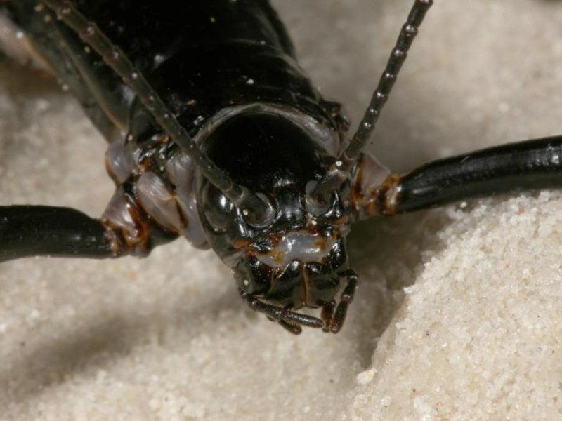 Patrick Honan Tree Lobster