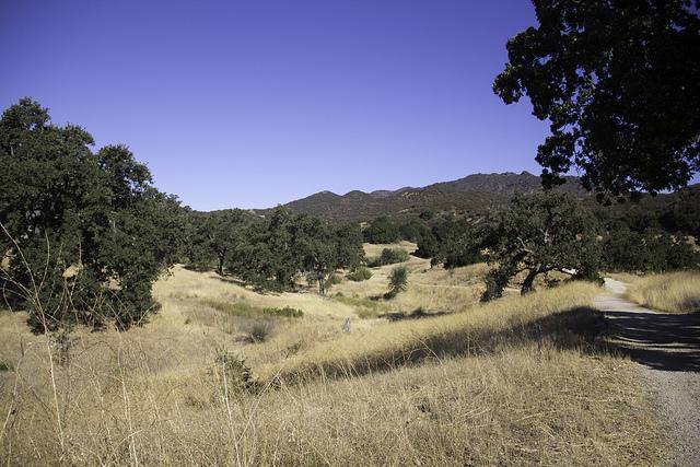 Island Conservation Science CA grassland