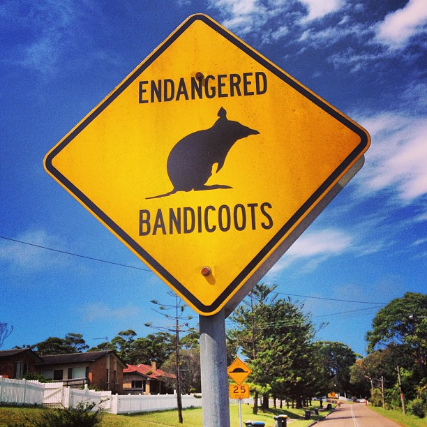 Island Conservation Science Bandicoot Sign Howard