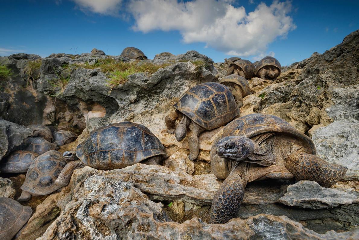 Island Conservation Science Tortoises Seychelles