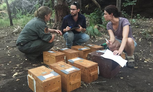 Island Conservation Science Quoll Release
