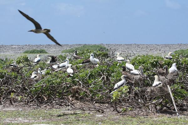 Island conservation Science Seabirds Tromelin