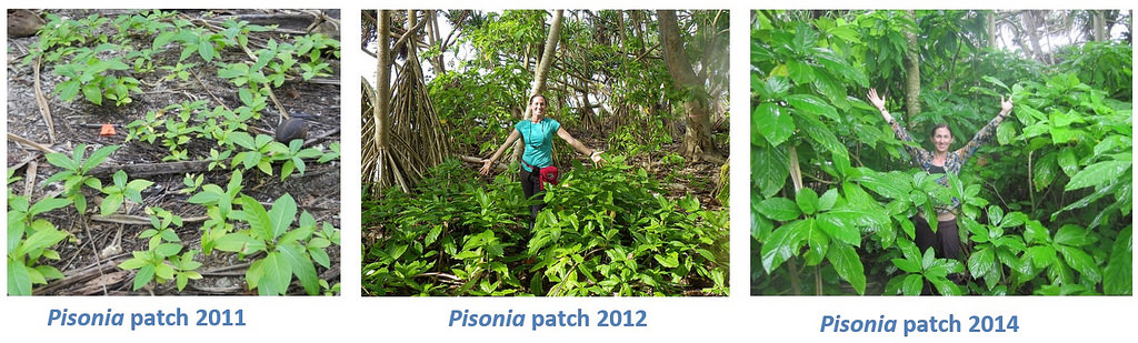 Island-Conservation-Science-Native-Pisonia- Palmyra Atoll -Dateline-Photo-Andrew-Wright