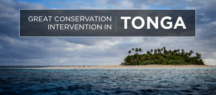 Island Conservation press release tonga