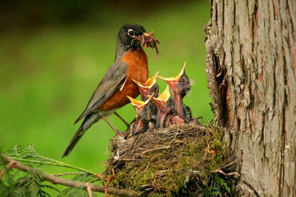 Island-conservation-mothrs-day- (2)