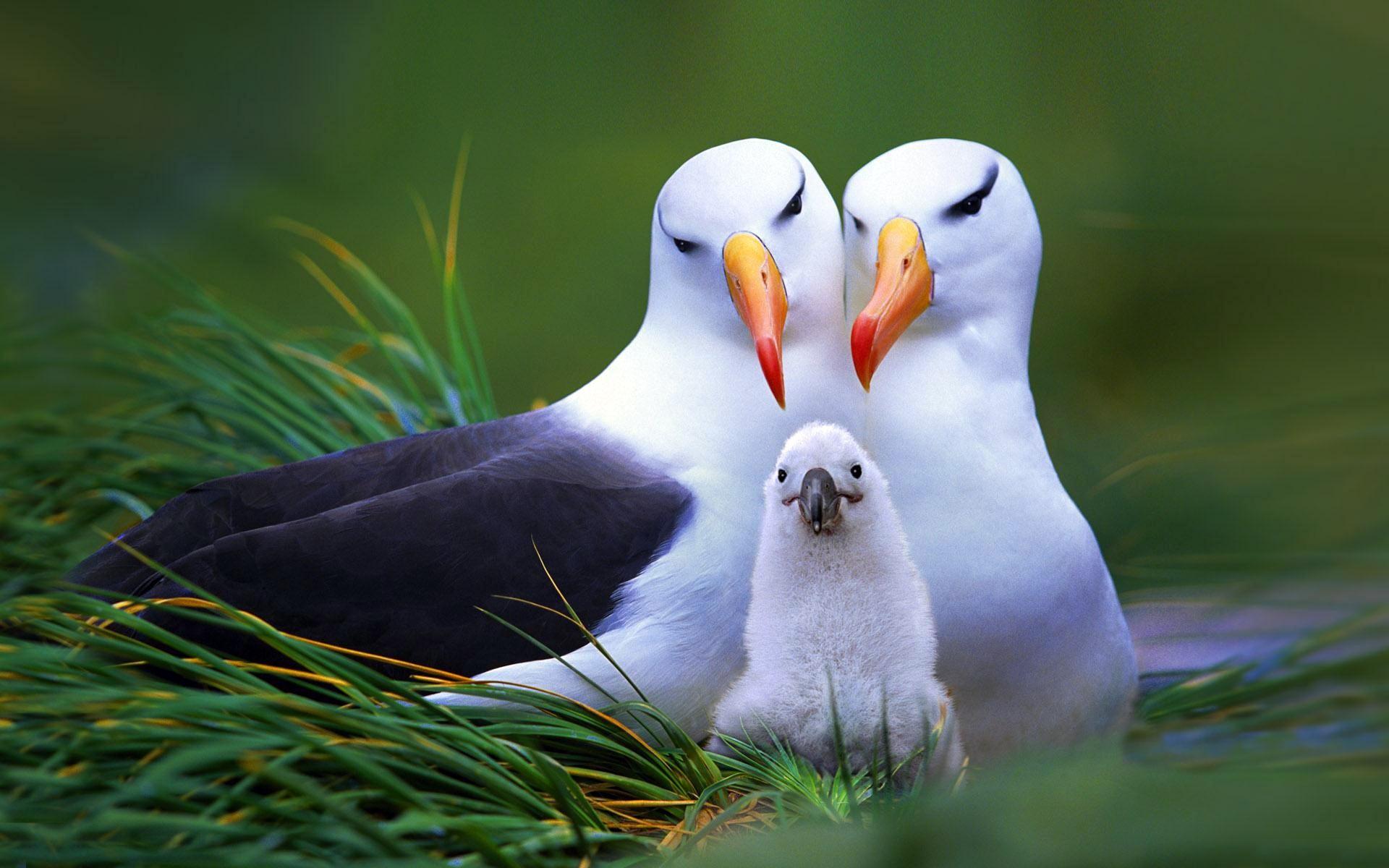 Island-conservation-mothrs-day- (4)