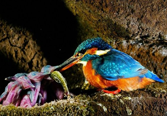 Island-conservation-mothrs-day- (7)