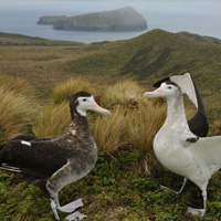 ISLAND CONSERVATION ANTIPODES ISLANDS NEW ZEALAND