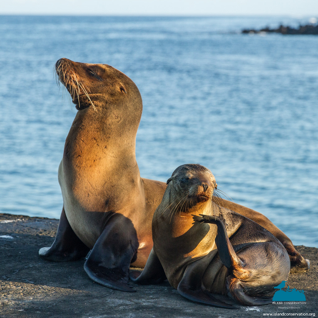 island-conservation-science-photography-mothers-day-2016-1