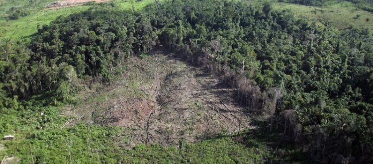 Island Conservation Science Deforestation
