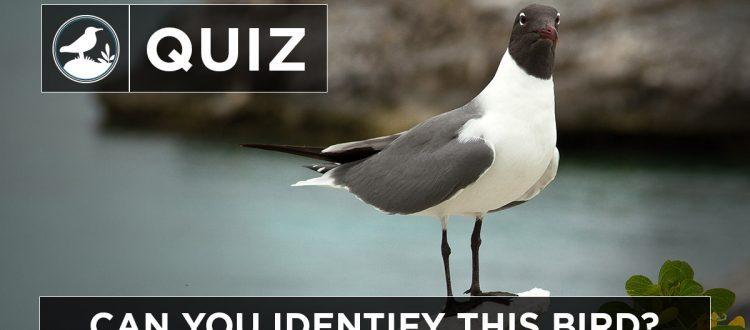 Island Conservation Science migatory birds quiz