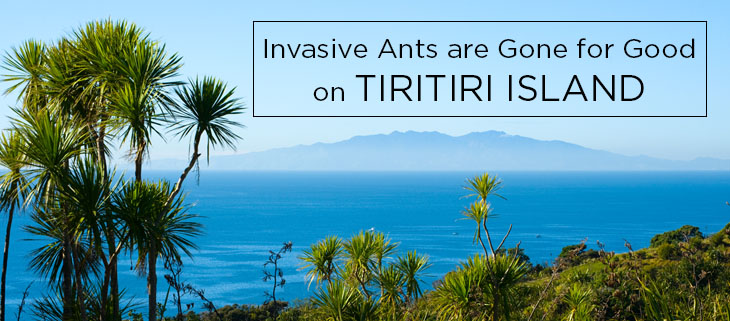 island-conservation-science-ants-are-gone