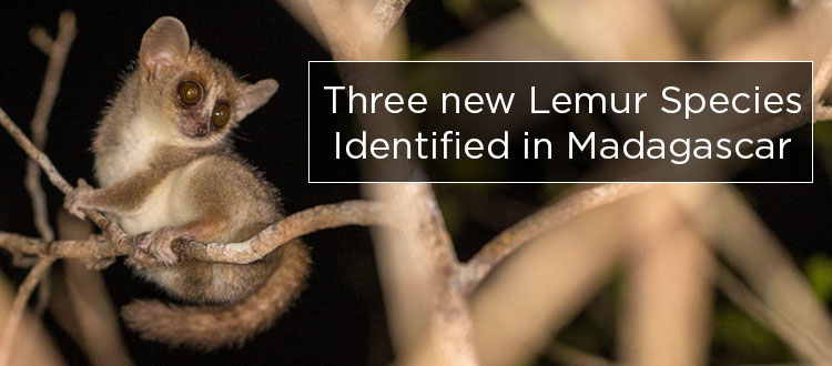 island conservation science lemurs