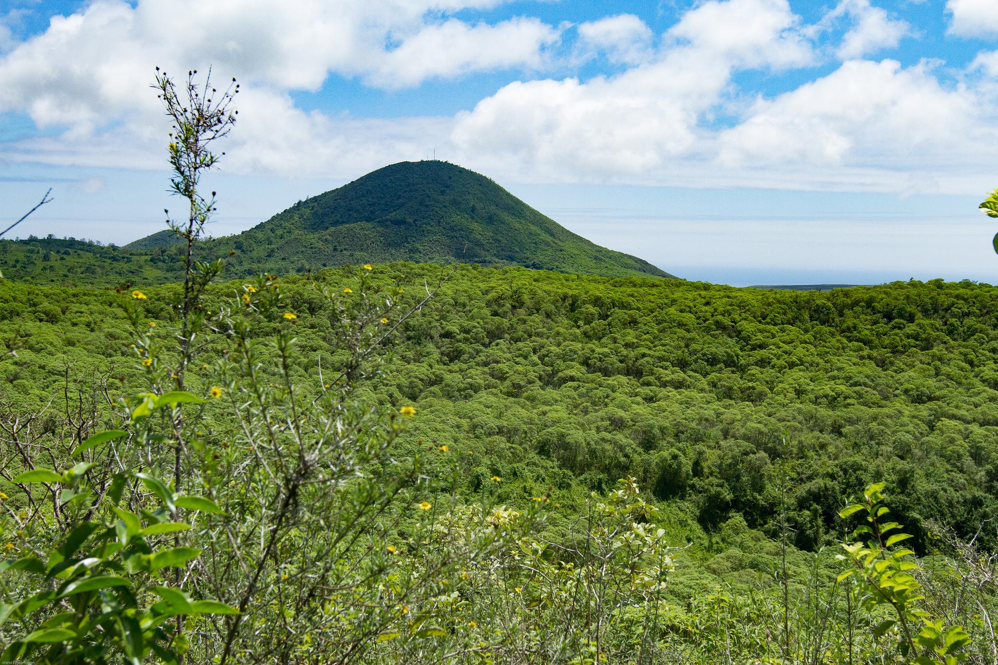 Island Conservation Floreana Landscape