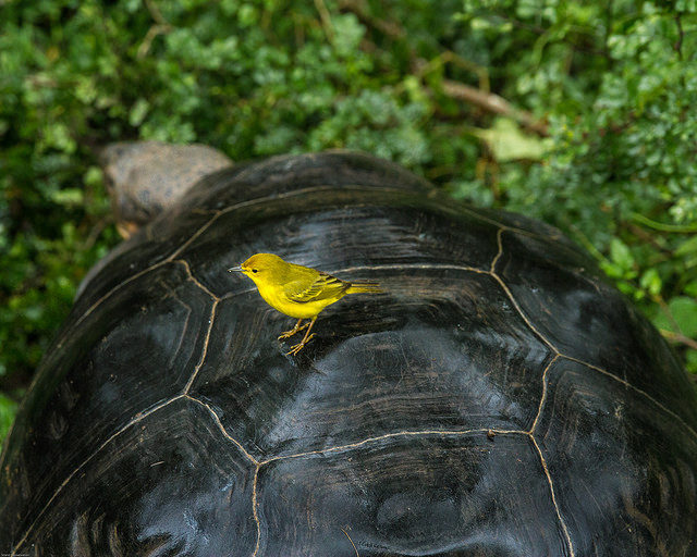 Island Conservation Science Tortoise Bird