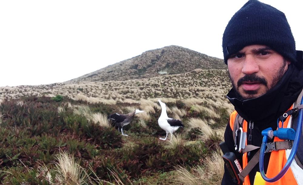 island conservation new zealand anitpodes island wandering albatross antipodensis million dollar mouse jose luis herrera