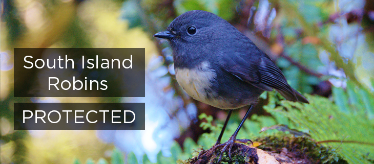 Island Conservation Science Robins Protected