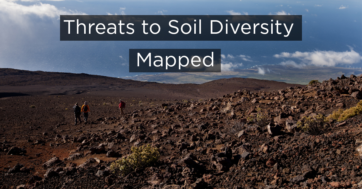 soil diversity Bio 101- name: _____ lab: exploring soil invertebrate biodiversity introduction in this field study we will quantify the diversity of.