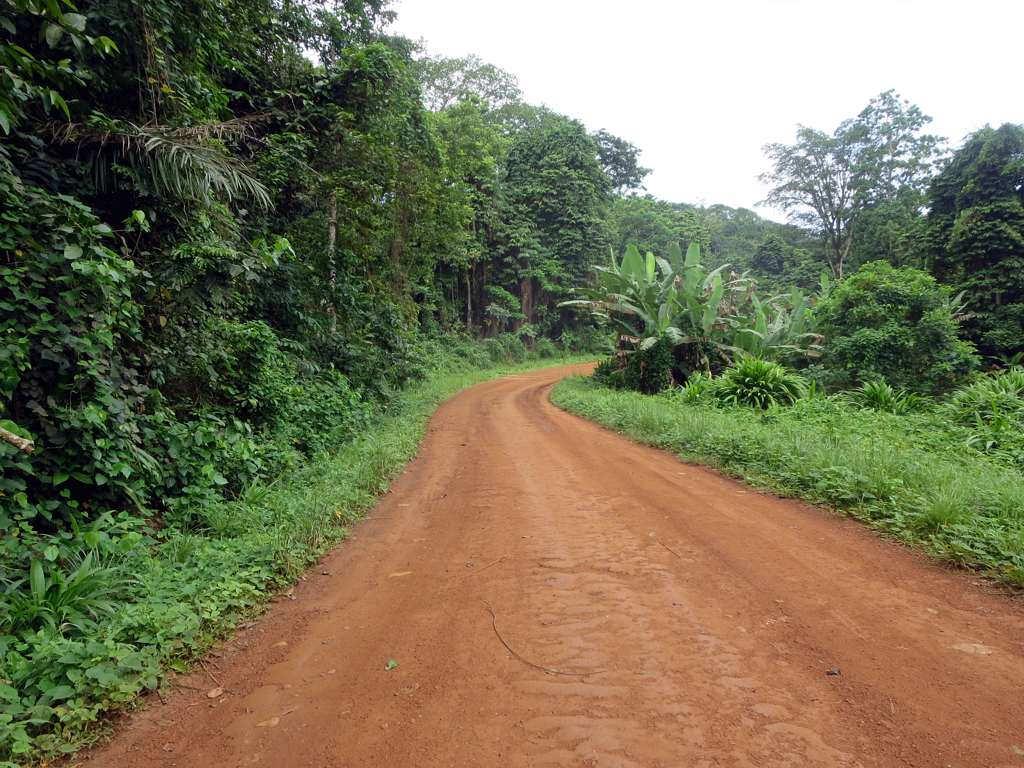 Island Conservation Road on Principe