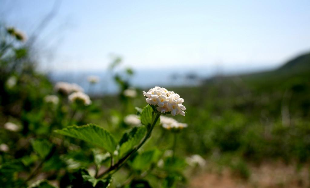 Island Conservation Plant Isla de Plata
