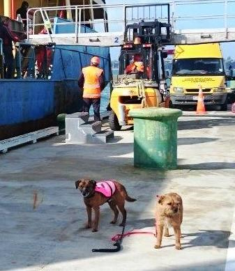 Island Conservation Biosecurity Canine Team
