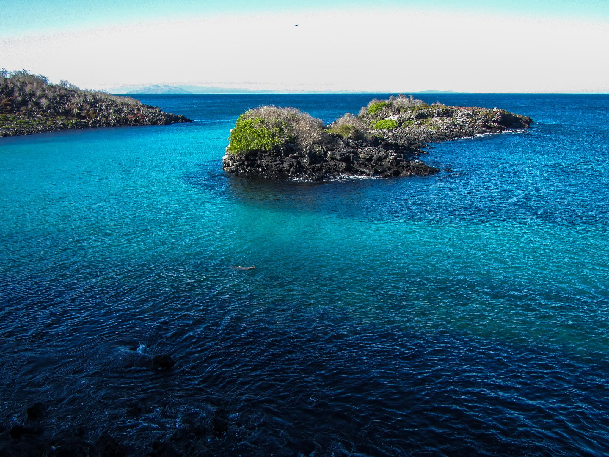 island conservation pinzon island galapagos biodiversity