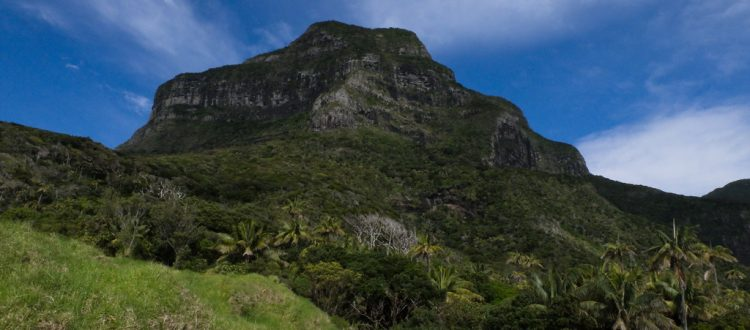 island conservation science lord howe island