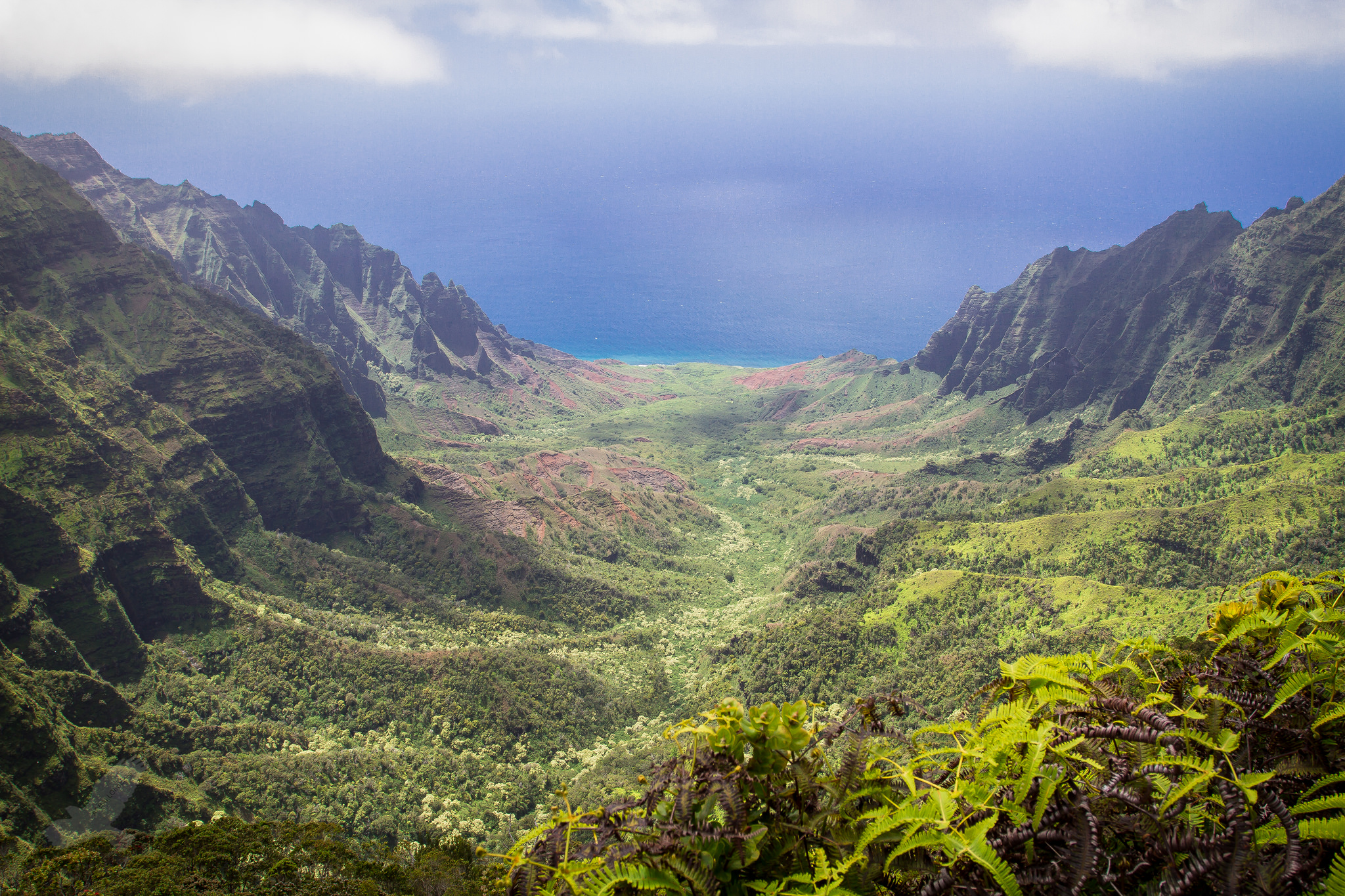 island conservation science hawaii landscape