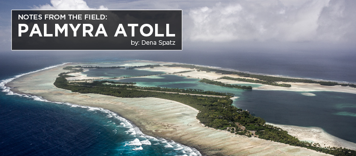 Island conservation palmyra dena spatz science
