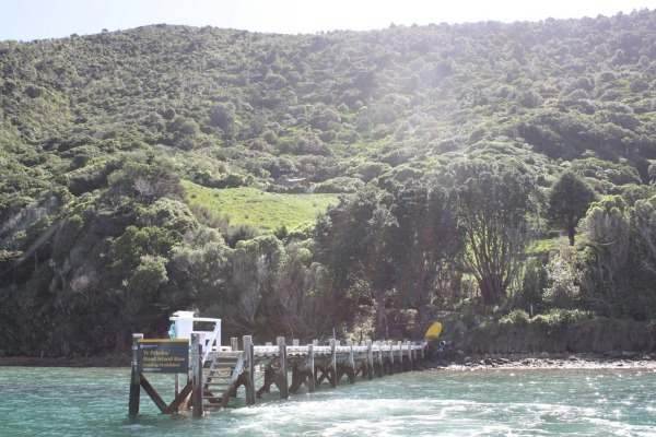 island conservation maud island dock new zealand