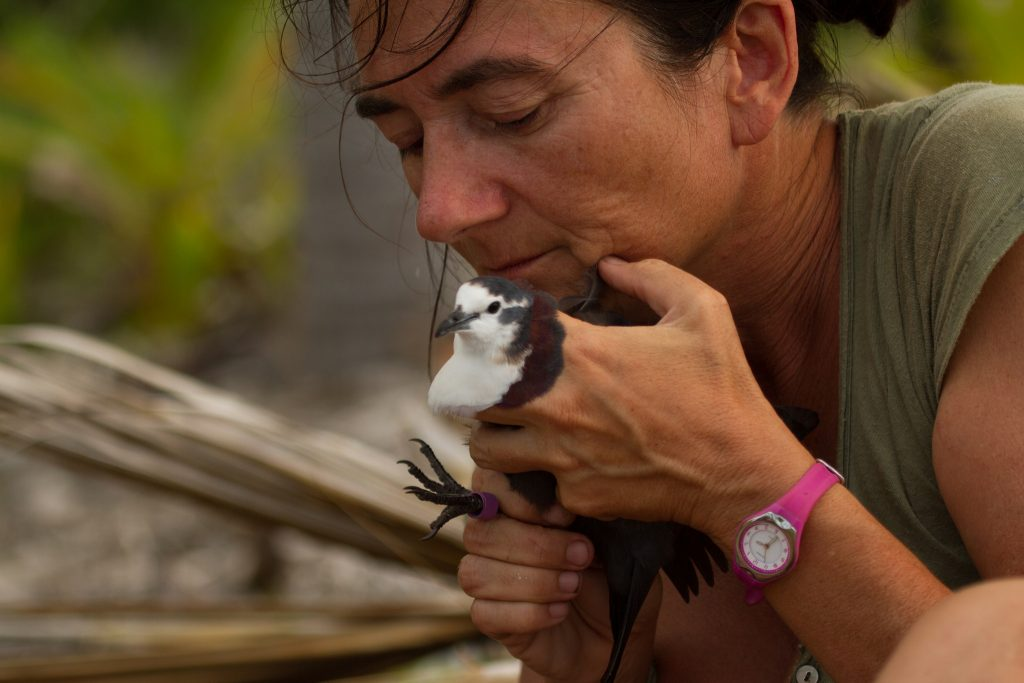 island conservation french polynesia tutururu