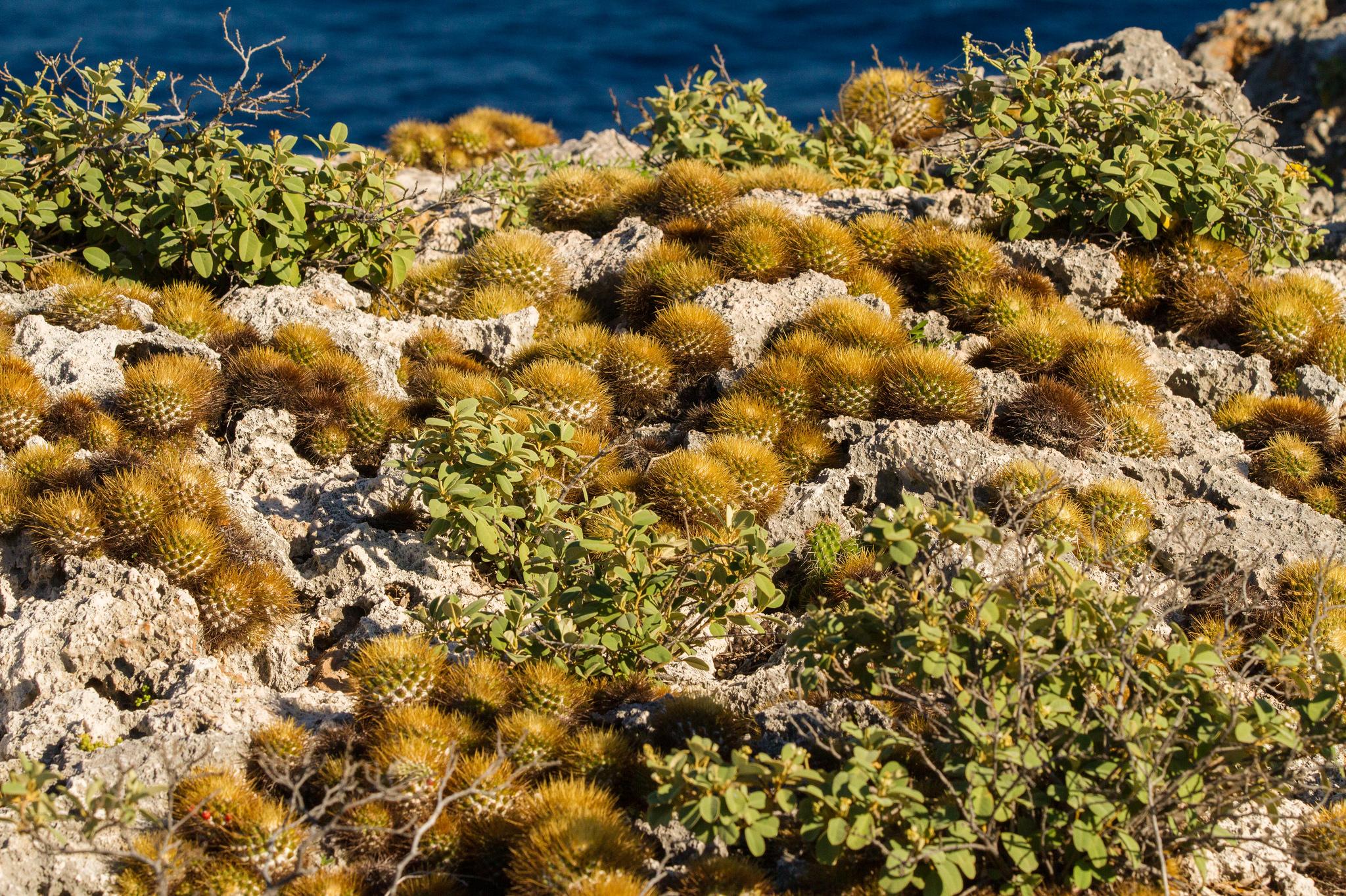 island conservation vegetation on mona island