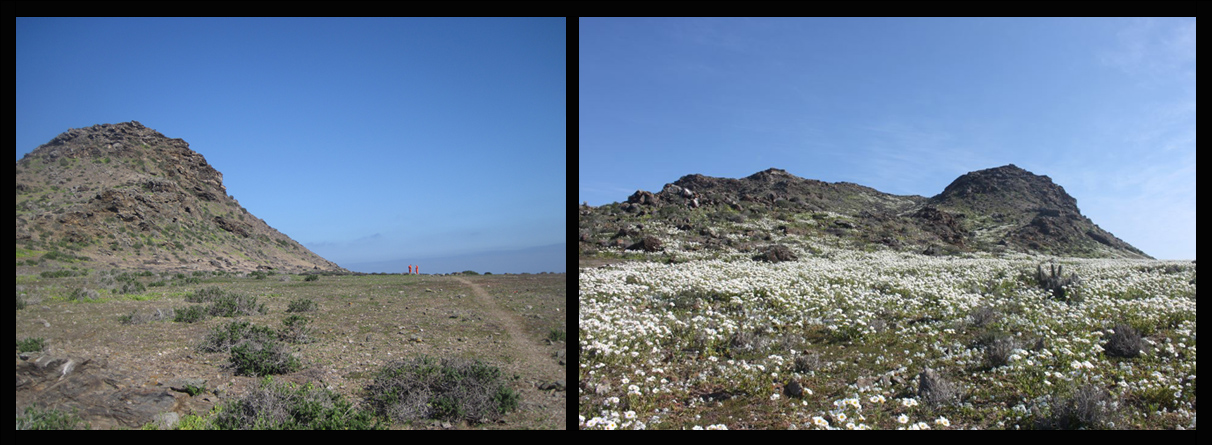 island conservation before and after restoration