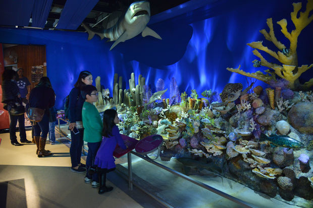 island-conservation-coral-reef-exhibit
