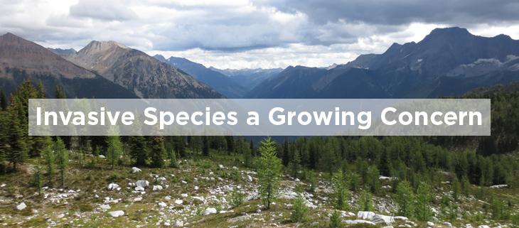 island conservation invasive species growing concern