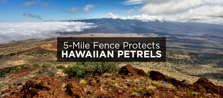 island conservation science hawaiian petrels protected 2016
