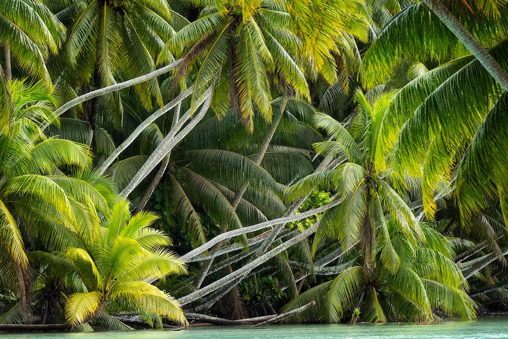 island conservation palmyra