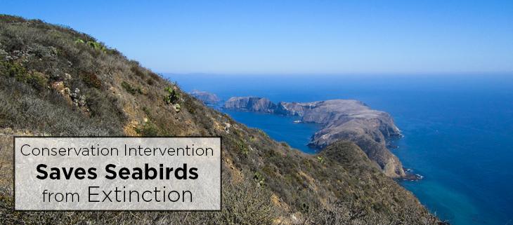 island conservation anacapa island feat