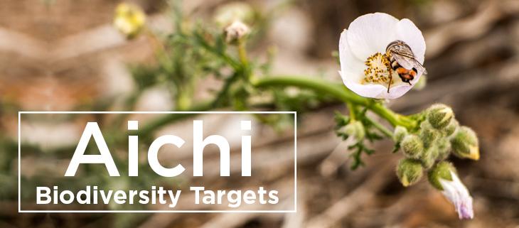 island conservation biodiversity aichi targets