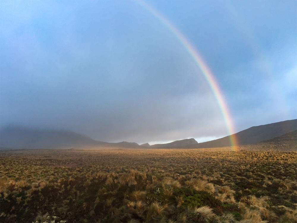 island-conservation-preventing-extinctions-antipodes-island-new-zealand-rainbow