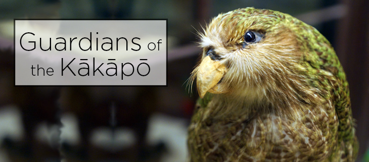 island-conservation-preventing-extinctions-guardians-of-the-kakapo-feat