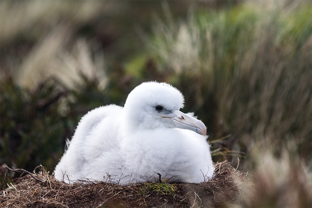 island-conservation-preventing-extinctions-new-zealand-protect-wildlife