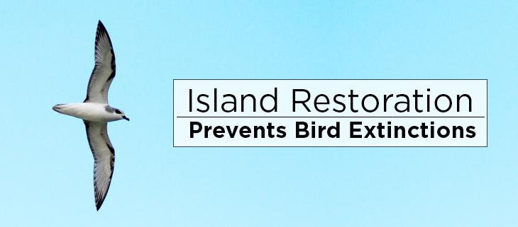 island-conservation-preventing-extinctions-restoration-birds-feat