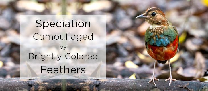 island conservation speciation birds
