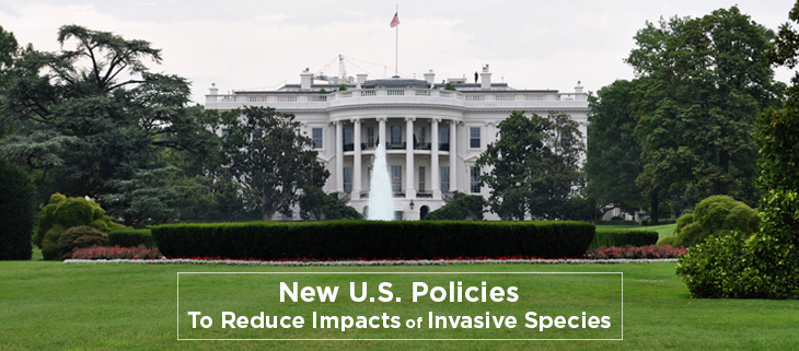 island-conservation-preventing-extinctions-united-states-policy-invasive-species-feat