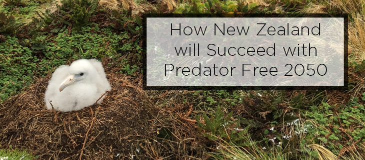 Island conservation predator free NZ_feature